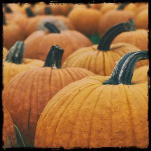 A bunch of orange pumpkins all together - image by Aaron Burden unsplash.com
